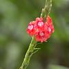 Flower-1742