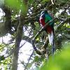 Quetzal-5097
