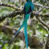 Quetzal-1828