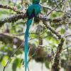 Quetzal-1837