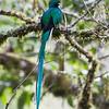 Quetzal-1835