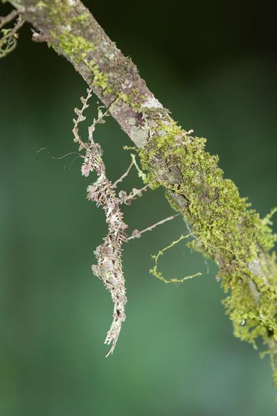Stick-Bug-Camo-1450