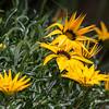 Flower-4980