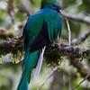 Quetzal-1844
