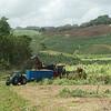 "For a better look at a mechanical sugarcane harvester see <a href=""https://www.google.com/search?q=sugar"">https://www.google.com/search?q=sugar</a>+cane+harvester&client=safari&rls=en&tbm=isch&tbo=u&source=univ&sa=X&ved=0ahUKEwjY98LTxsfSAhUD7CYKHcWnAJ0QsAQIGw&biw=1440&bih=788#imgrc=_"