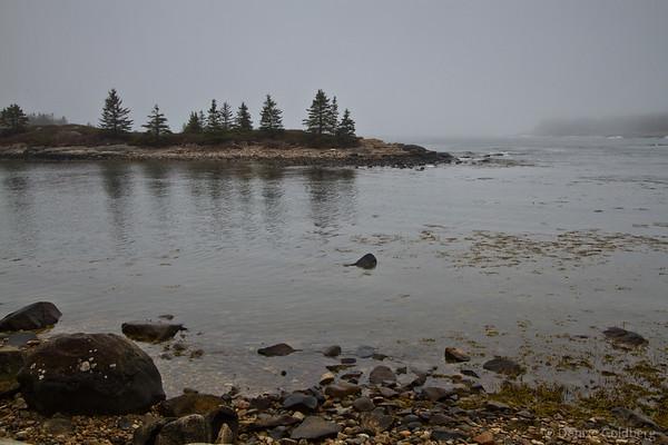 on the Schoodic Peninsula