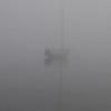 Foggy Southwest Harbor