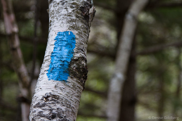 trail markers, blue blazes
