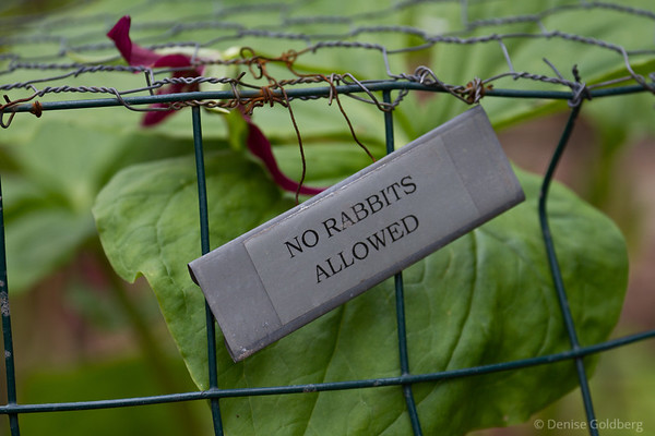 cages to protect flowers, no rabbits allowed