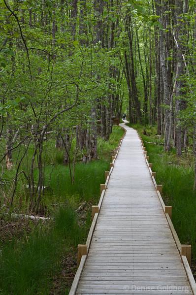 Boardwalk, Jessup Path, Acadia National Park