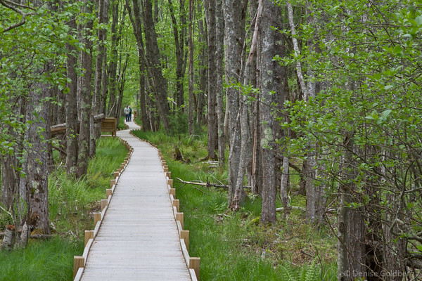 Boardwalk, Jessup Path, Acadia National Park
