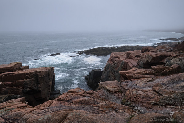 a foggy morning on Ocean Path, Acadia National Park