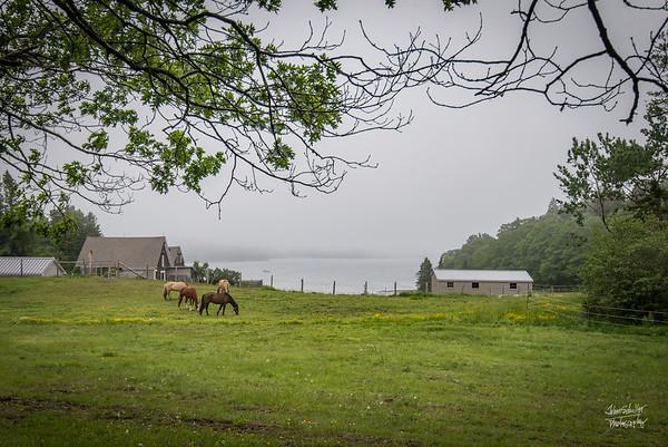 Pretty Marsh Horses