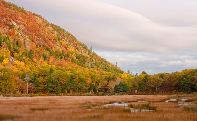 I stopped along the road early one morning to capture this. A gentle breeze was moving the grasses in the foreground. The early sun saturated the trees of Dorr Mountain with color.