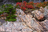 Granite along with the colorful plants growing along the Otter Cliffs