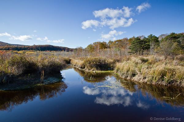 colors past peak, Acadia National Park