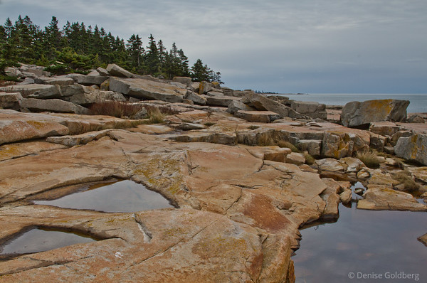 puddles, rocks, and trees, on the Schoodic Peninsula