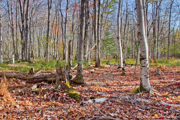 October, Acadia