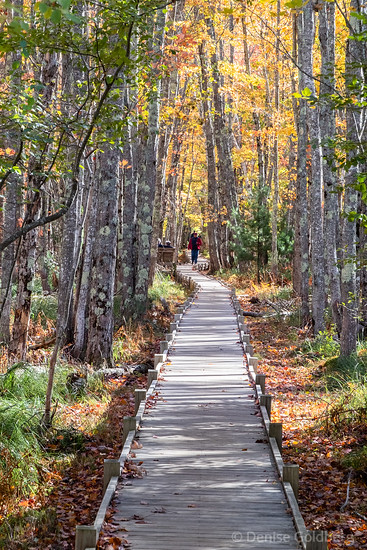 Jesup Path, Acadia National Park