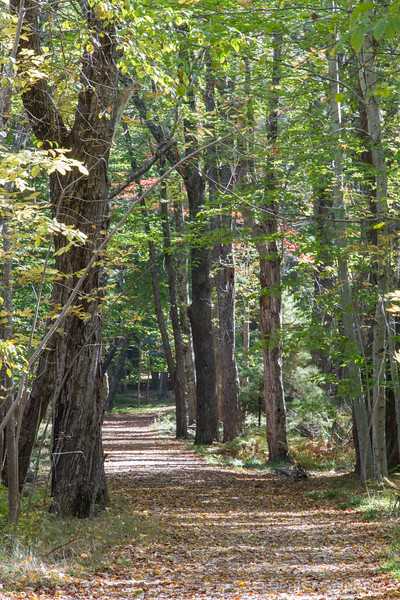 down the trail...