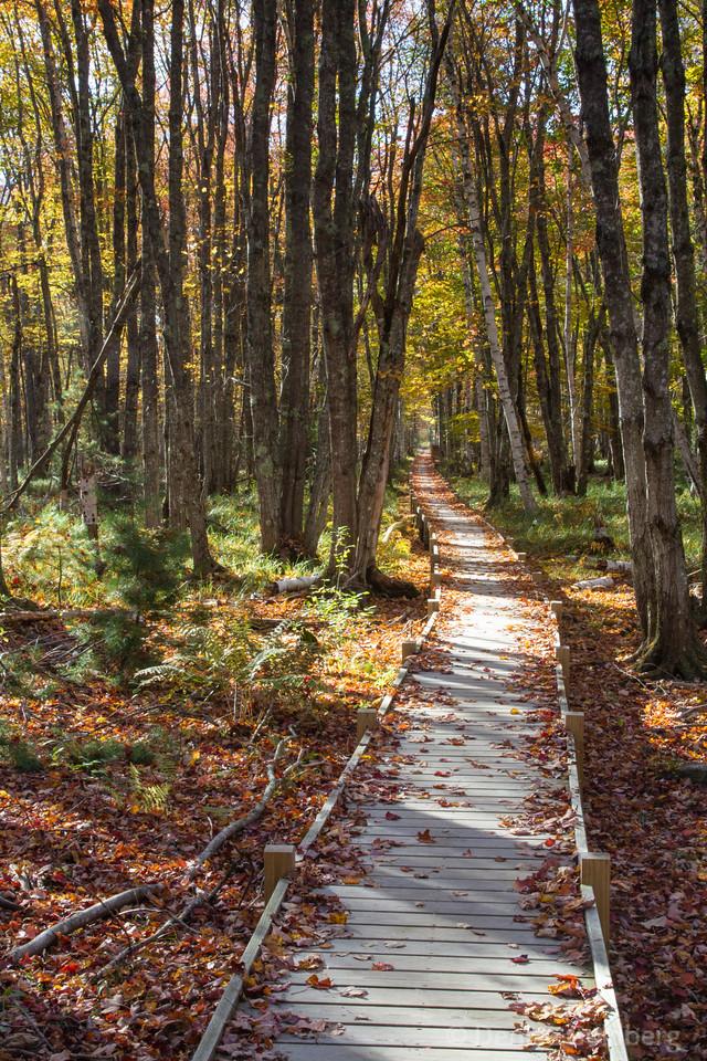 boardwalk, Jesup Path