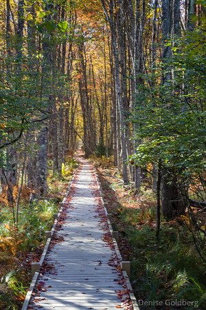 boardwalk, Jesup Path