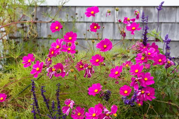 late season flowers