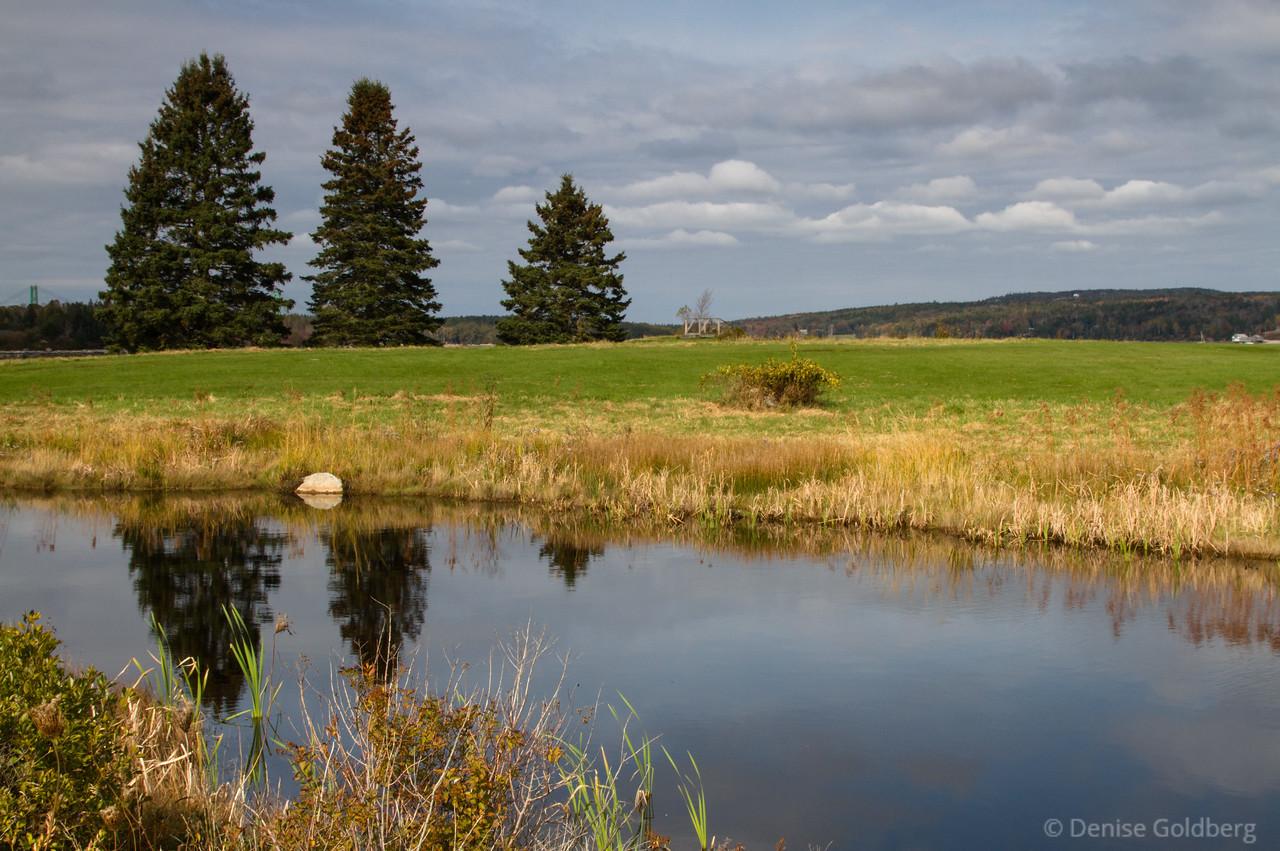trees, reflecting