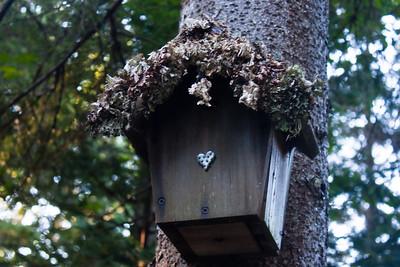 The Bird Houses of Artist's Haven Acadia 2009