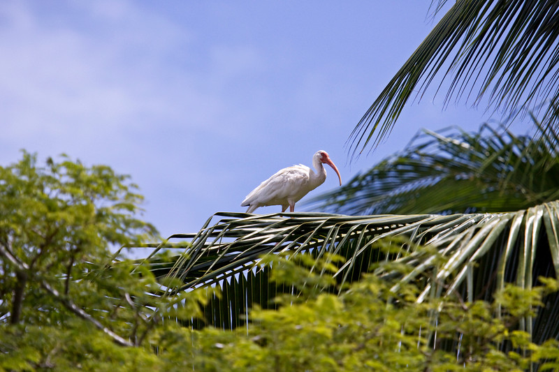 White ibis we saw on the lagoon tour
