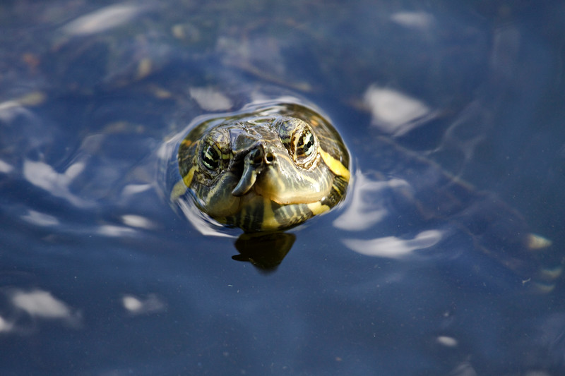 C'mon Out & Play!<br /> There were lots of turtles in the pond in the park across the street