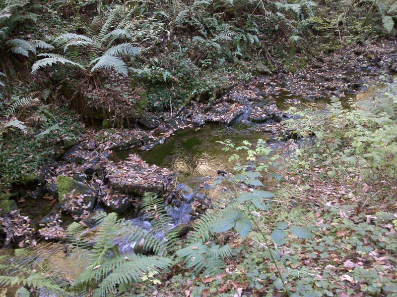 Streamlet at Cwmcarn