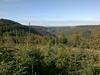 Cwmcarn greenery