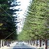 Trees line up the streets near Glenelg, South Australia.