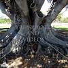 Tree ground roots.
