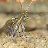 Shrimp (Need ID)