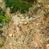Nudibranch (Need ID)