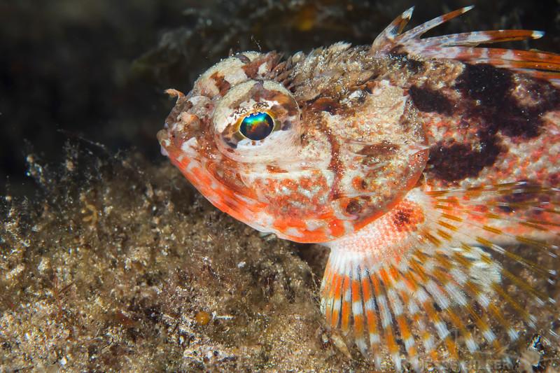 Fish (Need ID) - Edithburgh Dive #2 (:39)