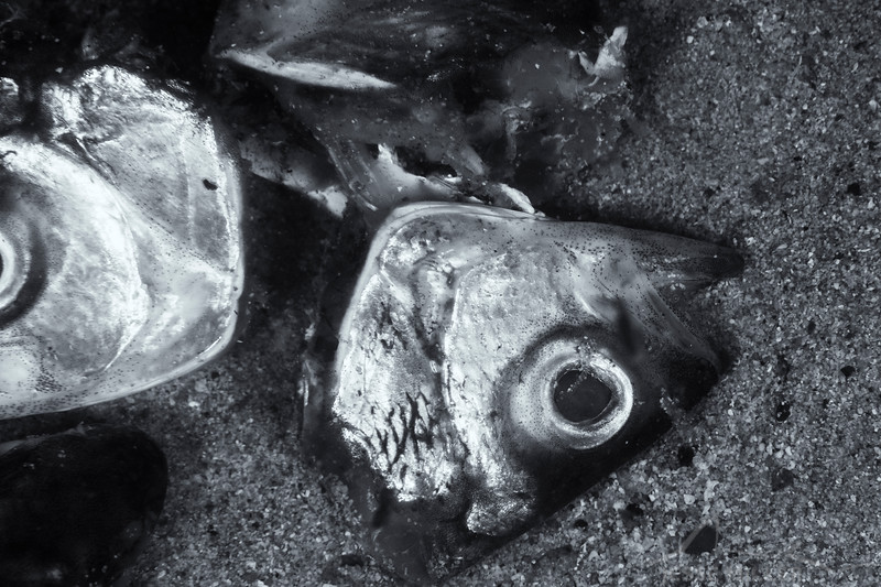 Fish Heads - Edithburgh Dive #3