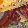 Crab (Need ID)