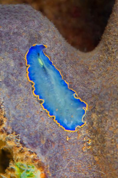 Flatworm (Need ID)