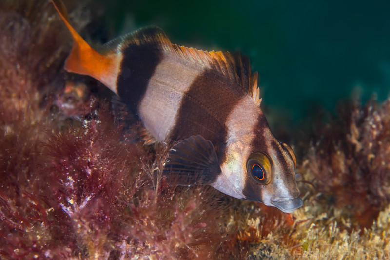 Fish (Need ID)