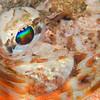 Fish (Need ID) - Edithburgh Dive #2 (:33)