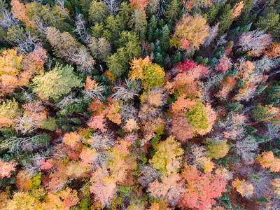 Treetops4