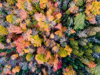 Treetops6