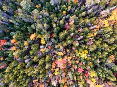 Treetops7