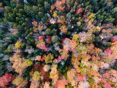Treetops8
