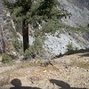 Greg stopped and showed us how this part of the hill drops down into the South Fork of Lytle Creek.