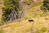 On the way down we saw a few more bears including this one.