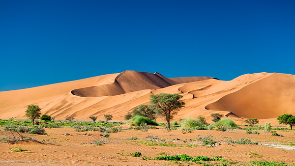 The sand dunes at Soussesvlei